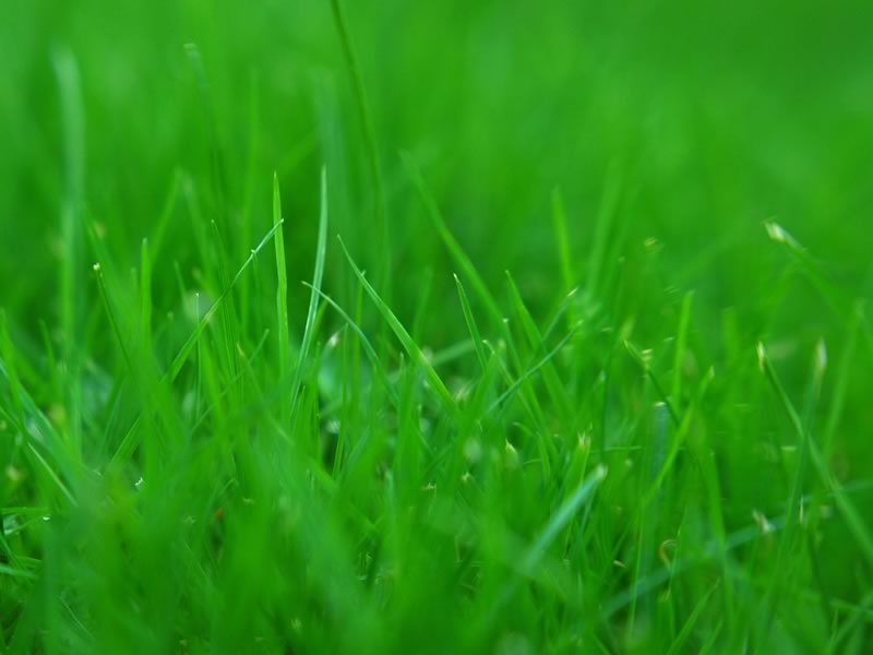 Photo of Színek jelentései: Zöld – kiegyensúlyozottság, harmónia
